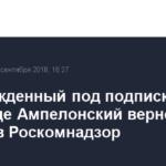 Освобожденный под подписку о невыезде Ампелонский вернется на работу в Роскомнадзор