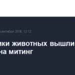 Защитники животных вышли в Томске на митинг